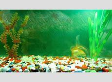 Animated Wallpaper and Desktop Backgrounds Aquarium mpg