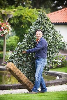 lebender zaun immergrün hecke am laufenden meter 174 mobilane fertighecke