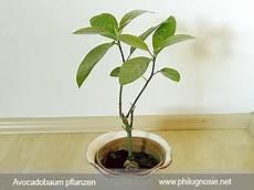 10 Best Pflanzen Und Garten Images On Decks
