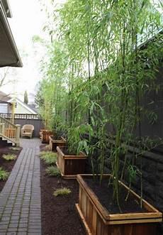 Plantes De Jardin Le Bambou Fascinant Et Polyvalent