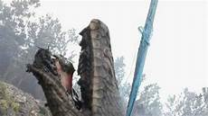Ular Langka Menjadi Korban Kebakaran Hutan Di Kalimantan