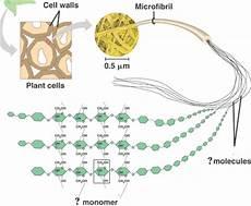 quia 9ap chapter 5 macromolecules detailed