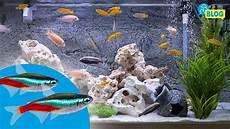 welche fische passen zusammen aquarium aquarium fische welche fische passen zusammen