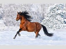 HD Wallpapers Desktop: Horses HD Wallpapers
