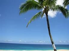 turisti per caso hawaii hawaiian palm viaggi vacanze e turismo turisti per caso