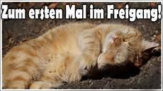 Katze Nala Darf Das Erste Mal Raus Alte Katze Bekommt
