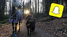 ponys zu verschenken pony zu verschenken endlich wieder longieren 27 03
