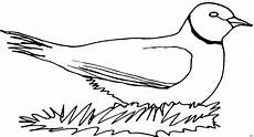 malvorlage vogel im nest vogel im nest ausmalbild malvorlage comics