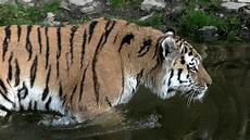 am zoo zoo wuppertal
