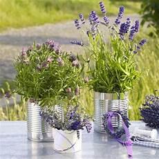 Dekorieren Mit Lavendel - 28 best images about ideen zur silberhochzeit on