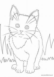 Ausmalbilder Katzen Zum Ausdrucken Kostenlos Katze Zum Ausmalen Ausmalbilder Pferde Viele