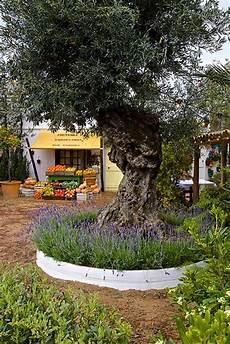 Mediterranen Garten Gestalten - garden design mediterranean garden plants rhs gardening