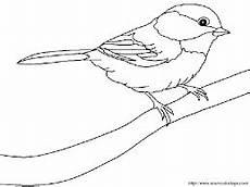 bildergebnis f 252 r spatz v 246 gel zeichnen vogel malvorlagen