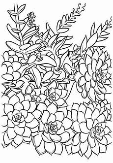 printable succulent coloring cards succulents and sunshine