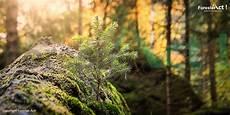 Bagaimana Cara Menjaga Kelestarian Hutan Agar Fungsi