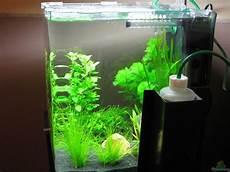 nano aquarium 30l aquarium jens nessenius dennerle 30l nano cube