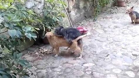 Donne Che Fanno Sesso Con Il Cane