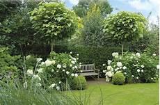 arbre pour petit jardin savoir quel arbre planter dans un petit jardin