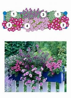 balkonkästen bepflanzen ideen balkonblumen fantasievoll kombiniert garten balkon