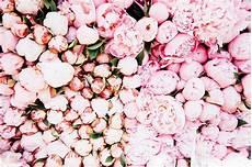 Flower Wallpaper Macbook Air by Peonies Flower Markets Flowers Flower Desktop