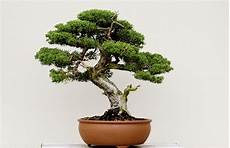 A Guide To Bonsai In Boston