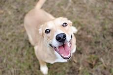 spa mulhouse chien 8 raisons d adopter un chien dans un refuge guide du chien