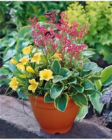 Kit Pot Fleuri 3 Plantes Pour Balcon 224 Cultiver Balcon