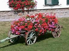 giardini in fiore foto fiori gerani geranio gerani fiori giardino