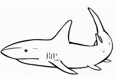 Malvorlage Hai Einfach Malvorlage Hai Kostenlos