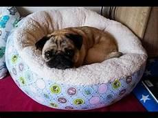 Hundebett Selber Machen - diy hundekorb n 228 hen hund hunde kissen hundekorb und