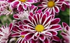 23 Jenis Bunga Terindah Di Dunia Yang Mu Membuatmu