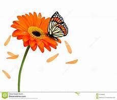 Malvorlage Schmetterling Mit Blume Hintergrund Mit Sch 246 Ner Roter Blume Mit Schmetterling