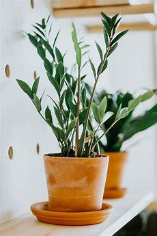 my 5 favorite low light house plants how to care for