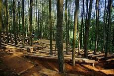 Wisata Alam Hutan Pinus Mangunan Imogiri Bantul
