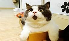 Kumpulan Gambar Kucing Lucu Imut Dan Menggemaskan
