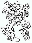 Gooseberry Coloring Pages Download And Print
