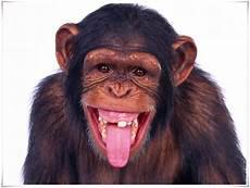 Monyet Nama Gambar Binatang A Z