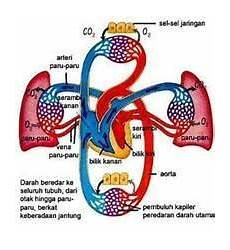 Kardiovaskuler Definisi Bagian