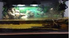 tortue eau douce aquarium aquarium tortue d eau