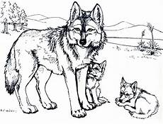 baby wolf coloring pages to print coloring home