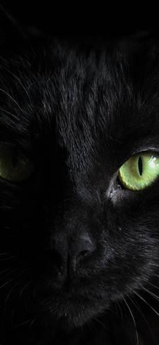 Black Cat Wallpaper Iphone