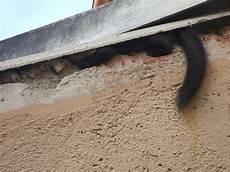 marder im dachboden