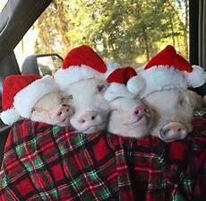 pigs in a blanket merry christmas vegan