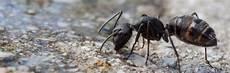 Was Hilft Gegen Ameisen Im Garten - was hilft gegen ameisen