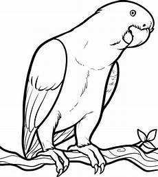 parrot looking for food coloring page print