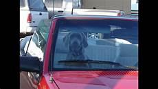 hunde im auto transportieren transportbox oder