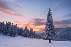 weihnachten landschaft mit tanne im schnee und haus m