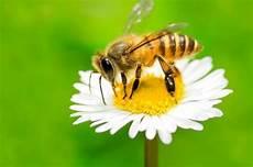 Lebah Terancam Punah Ini 5 Hal Mengerikan Yang Terjadi