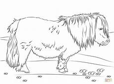 shetland pony coloring page free printable coloring