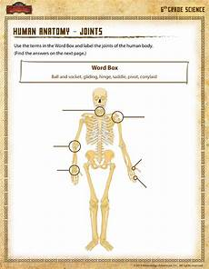 human anatomy joints view 6th grade science worksheets sod